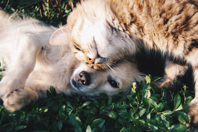 How Can You Prevent Obesity in Pets