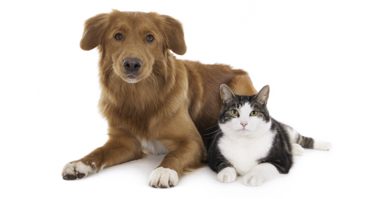 Brown dog with white and black cat