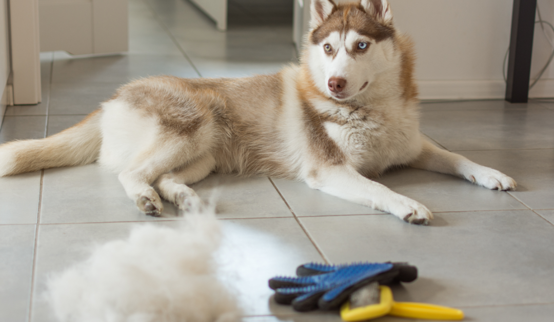 The Importance of Grooming & De-Shedding