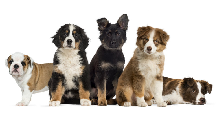 The Importance of Socializing Puppies to Guide Them to Being an Emotionally Healthy Adult